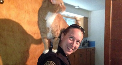 Cat perches on cop investigating burglary