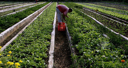What can urban agriculture do for Latin American cities?