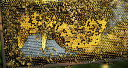 Readers write: Better help for bees, a troubling trend, no 'climate denier' as president