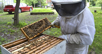 One group wants to protect agriculture, one bee hive at a time