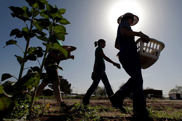 Half the farmers in the US are 55 or older, which means fewer small-scale farmers in the future. At the same time, the agricultural sector may be a source of jobs for the 74.2 unemployed youth in the world.