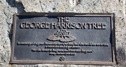 George Harrison memorial tree felled by ... beetles