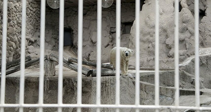 Arturo the polar bear: Why he's staying in Argentina