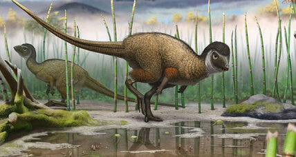 Were most dinosaurs feathery? New discovery suggests widespread dino-plumage.