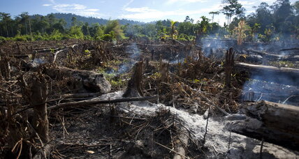 Study: Loss of Indonesia's pristine (and carbon-storing) forests is rising