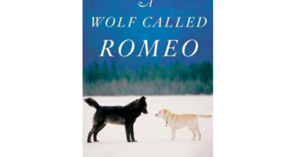 'A Wolf Called Romeo' tells the remarkable story of a wolf and his human friends
