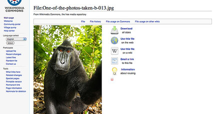 Monkey selfies: Can a macaque own intellectual property?