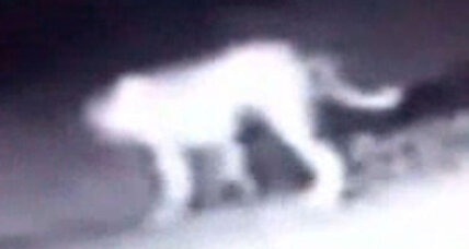 California mystery animal: Bizarre, catlike beast baffles experts