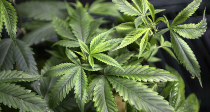 District of Columbia residents to vote on marijuana legalization