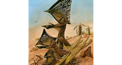 'Butterfly-headed' flying reptiles were social say paleontologists