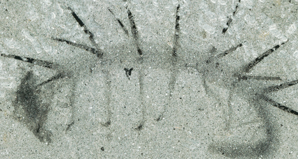Strange, clawed, lonely worm fossil finds family tree at last