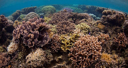 Corals, fish can sniff out a bad neighborhood, say scientists (+video)