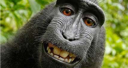 US government: Monkey selfies ineligible for copyright