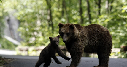 Bear rescue: Man drives an hour to save injured cub