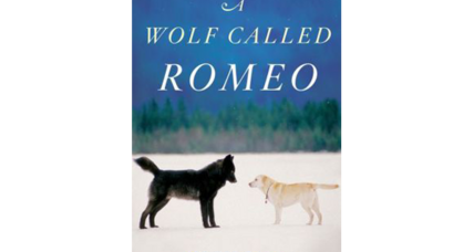 Reader recommendation: A Wolf Called Romeo