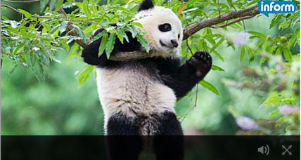 National Zoo celebrates Bao Bao's first birthday