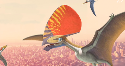 Ancient flying pterosaurs lived all around the world, had no teeth