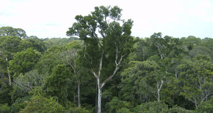 Deforestation: Brazil is a success story for conservation