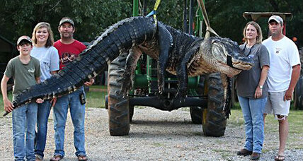 Humongous 1,000-pound alligator caught in Alabama