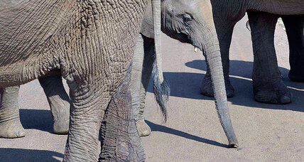 Chinese complicit in ivory poaching and elephant deaths. So are Americans.