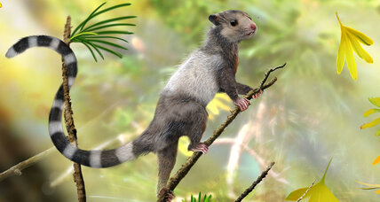 Jurassic 'squirrels' push back clock on emergence of mammals