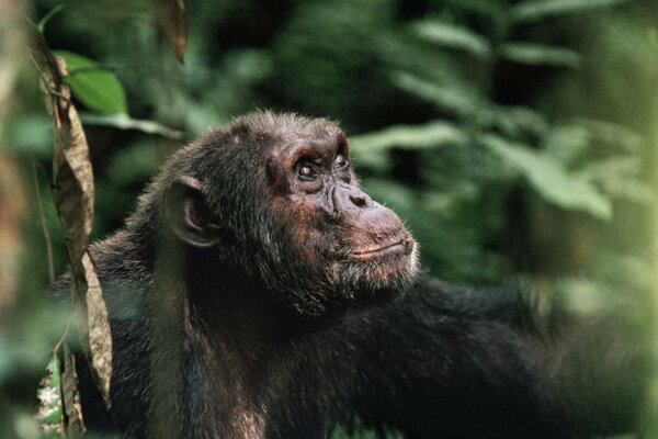 chimpanzee behavior These and other psychological influences on consumer behavior are studied in a  field known as consumer psychology the field recognizes.