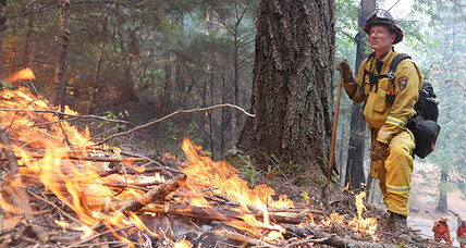 Readers Write: Wildfires will eradicate our forests; the fatiguing fight against Islamic State