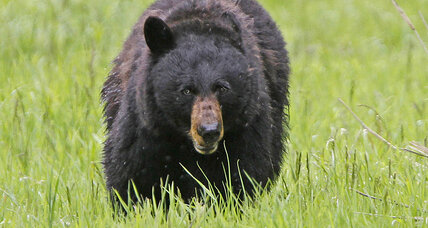 Fatal bear attack in New Jersey 'a rare occurrence,' says official