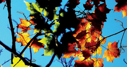 First day of autumn: Why do the leaves change color anyway?