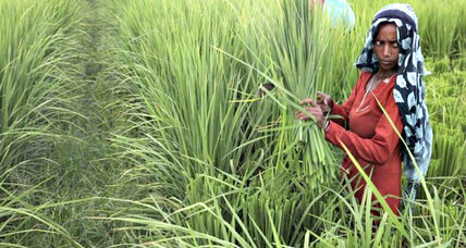 Climate-smart farmers get tech savvy to save India's breadbasket