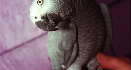 British parrot returns four years later, speaking Spanish