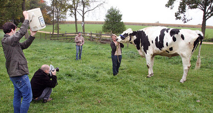 World's tallest cow: Blosom, a 6-foot-4-inch bovine