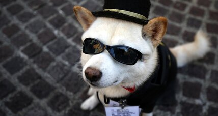 Halloween deals: the best place to buy your pet a costume
