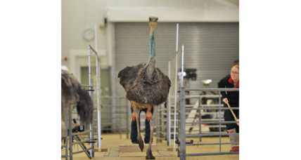 What can a robot learn from a flightless bird? Lots, it turns out.