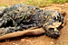 You won't believe how they rescued a dog that fell into hot tar in India