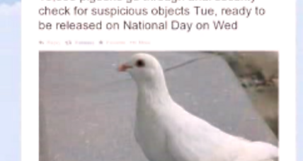 Why did China give 10,000 pigeons a full-body search?