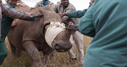 South Africa anti-poaching sting uncovers rhino horns