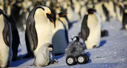 Scientists dupe Antarctic penguins with fluffy robot