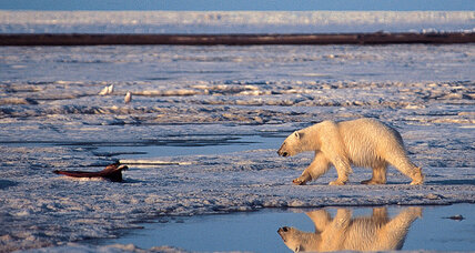 Elections 2014: Would a GOP win open up Arctic drilling?