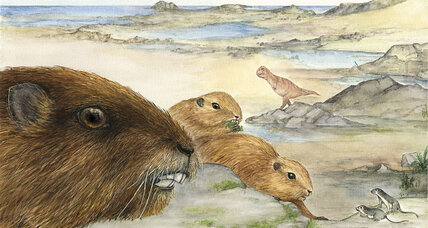 Ancient mammal resembled a 20-pound groundhog, say scientists