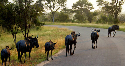 Wildebeest attack prompts calls from gnu-control advocates