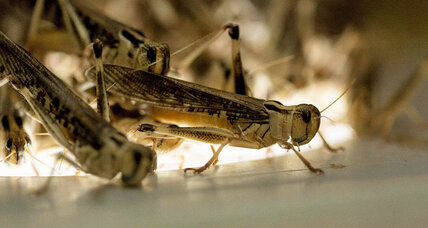 What were the first bugs like? Scientists map insect family tree. (+video)