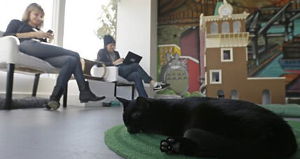 Oakland's cat cafe: Coffee, sugar, and a tabby, please?