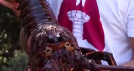 Dinner or pet? What not to name the lobster if you intend to eat it