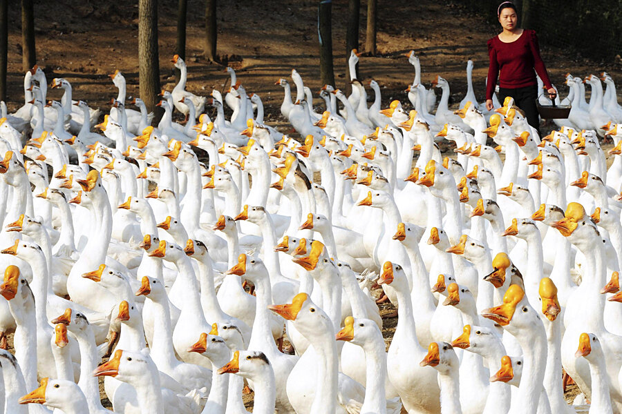 12 Days Of Christmas Costs.12 Days Of Christmas Gifts Cost 116k Geese A Laying Prices