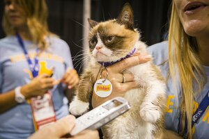 1208grumpycat?alias=standard_600x400 grumpy cat made nearly $100 million? not quite, owner says