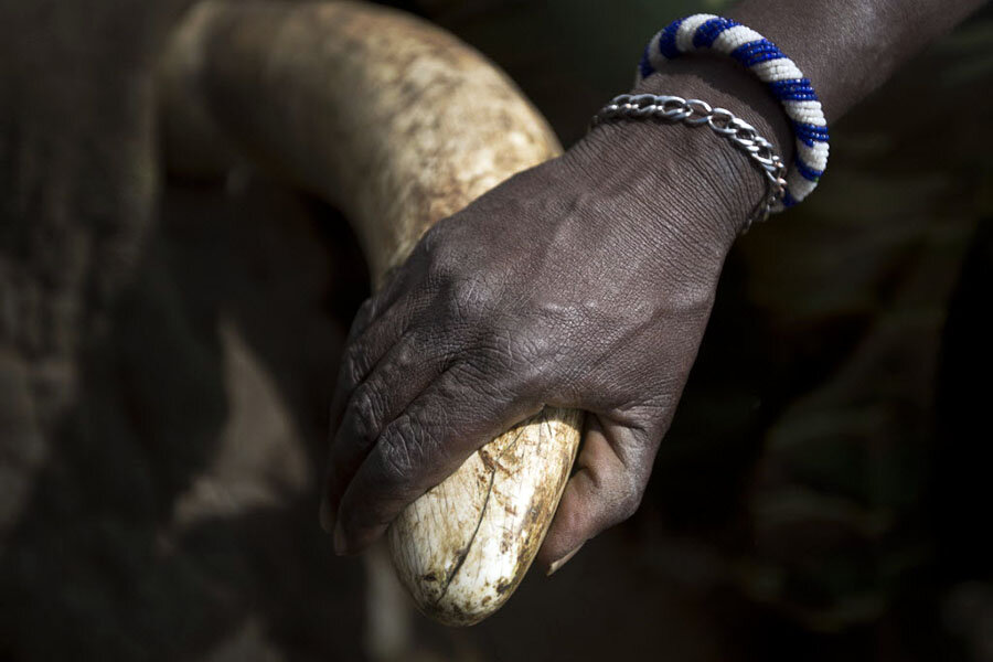 In China Demand For Ivory As Status Symbol Sends Prices Soaring