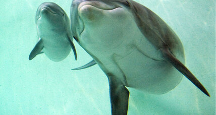Deep diving taxes the hearts of dolphins and seals, say scientists