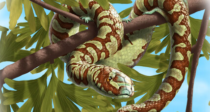 How did snakes evolve? Fossil discovery holds clues.