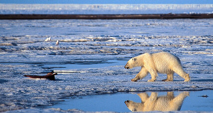 Arctic National Wildlife Refuge 101: three questions on where things stand